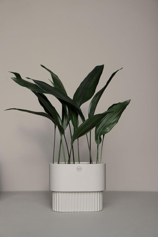 Front Blomsterpotte Oval S, Hvit